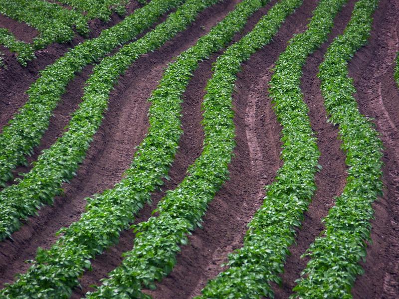 patatas para bolsas compostables sostenible